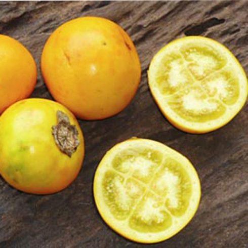 Solanum quitoense - Naranjilla - 5db mag/csomag