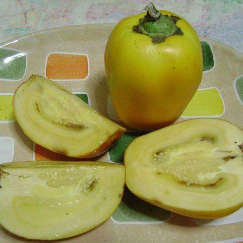 Solanum sessiliflorum - Orinico-paradicsom - 5db mag/csomag