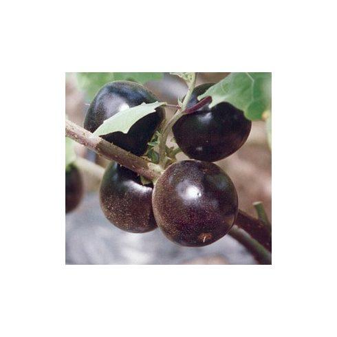 Solanum lasiocarpum - 5db mag/csomag