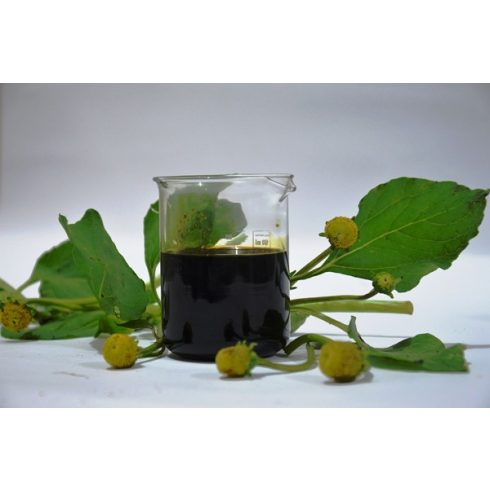 Acmella oleracea - Jambu - 5db mag/csomag