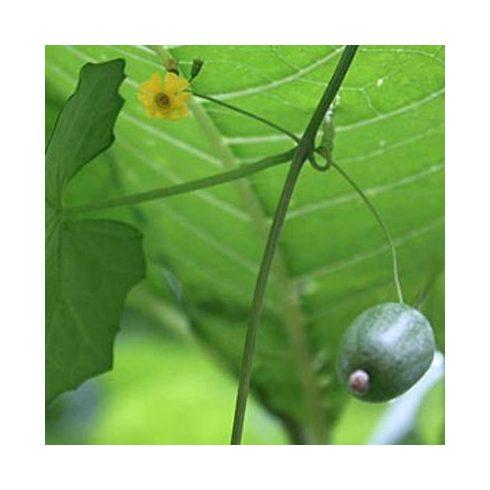 Melothria pendula - Kúszó uborka - 5db mag/csomag