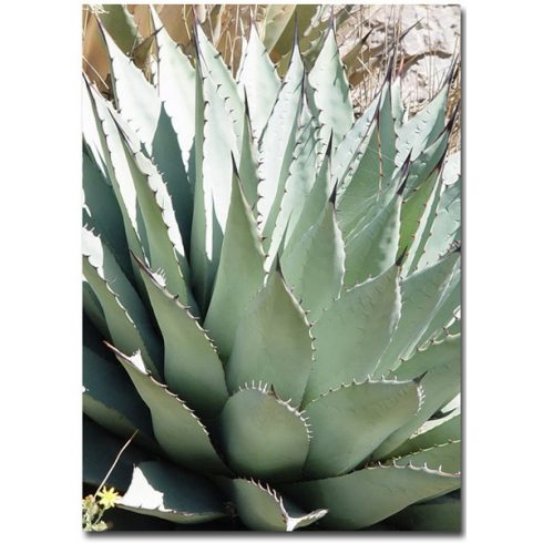 közös kezelés agave