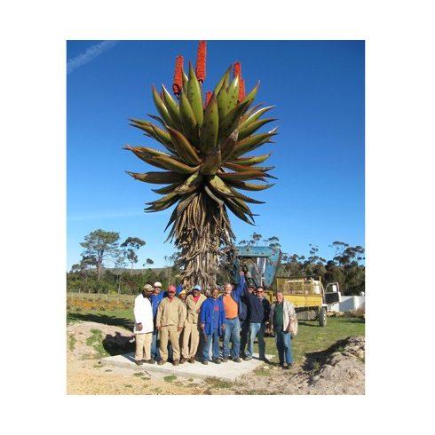 Aloe ferox - Tövises aloe - 5db mag/csomag